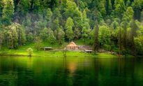 Ngắm những ngôi nhà trong rừng đẹp như tranh vẽ