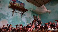 'Ốc đảo' Mỹ Đức: Người bì bõm dưới nước, gà vịt lên tầng sống