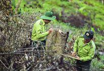Điện Biên: Công tác bảo vệ rừng gặp nhiều khó khăn