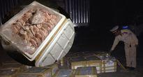 1 tấn tai lợn hôi thối trên xe tải Bắc - Nam