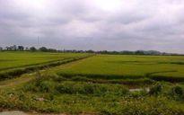 Hà Nội: Đạp xe qua cánh đồng, một phụ nữ bị giở trò đồi bại