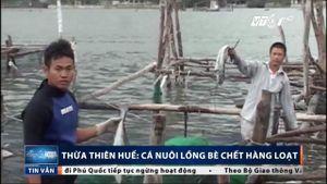 Thừa Thiên - Huế: Dân xót xa nhìn hàng tấn cá nuôi lồng bè bỏ ăn, chết trắng