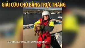 Trực thăng cứu hộ giải cứu chó gặp nạn