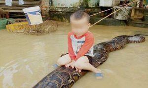 Bé trai cưỡi trăn ở Thanh Hóa: Gia đình bị phạt thế nào?