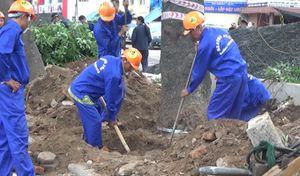 Hà Nội: Di dời số lượng cây xanh lớn nhất từ trước tới nay