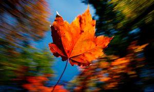 Chiêm ngưỡng 'Mùa thu Vàng' đẹp đến ngỡ ngàng trên khắp nước Mỹ