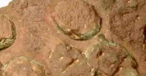 TQ: Phát hiện ổ trứng của loài khủng long chưa từng được biết đến