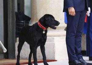 'Đệ nhất khuyển' tháp tùng Tổng thống Pháp đón khách