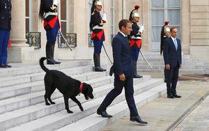 'Đệ nhất chó cưng' khiến Tổng thống Macron ngượng với cấp dưới