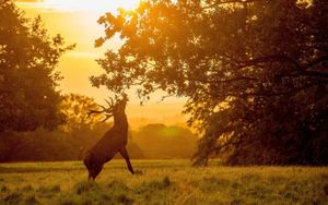 Ngỡ ngàng trước thiên nhiên đẹp đến mê hồn trong sắc Thu huyền ảo