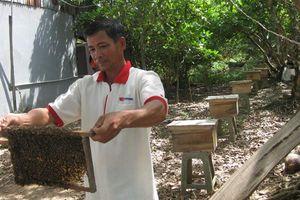 Nuôi ong làm giàu