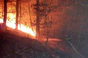 Nỗ lực khống chế đám cháy rừng ở Sóc Sơn