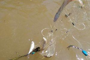 Ninh Bình: Xem thả lưới, học sinh lớp 4 trượt chân ngã xuống nước tử vong