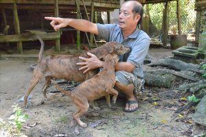 Khám phá chó Phú Quốc