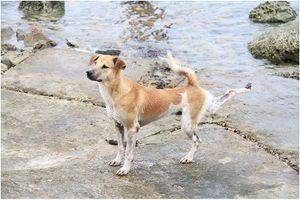 Chú chó tên Sơn Tùng nổi tiếng ở Trường Sa