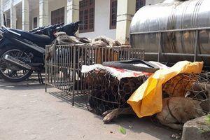 Quảng Trị: Phát hiện, bắt giữ 3 đối tượng trộm chó