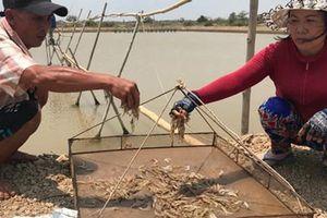 Khởi tố vụ chủ doanh nghiệp thủy sản chủ mưu đầu độc ao tôm