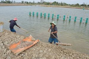 Khởi tố vụ án ném thuốc độc làm chết hàng triệu con tôm ở Sóc Trăng