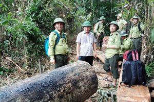 Để xảy ra phá rừng, nhiều cán bộ kiểm lâm bị kỷ luật