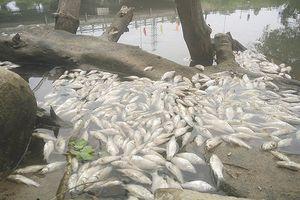 Công bố nguyên nhân gây cá chết ở Quảng Ngãi: Hòa cả làng!