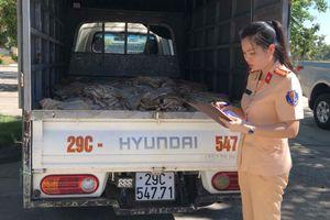Bắt vụ chở 1 tấn bì lợn hôi thối từ Hà Nội vào Thanh Hóa tiêu thụ