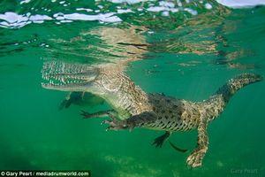 Bà mẹ lao xuống sông cứu con trai bị cá sấu kéo xuống nước