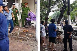 Cưa trộm cây sưa đỏ trên phố Phan Kế Bính (Hà Nội) giữa đêm mưa