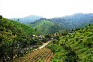 Hà Tĩnh: Lập hồ sơ khống, trang trại trái phép nhận hàng chục triệu đồng tiền hỗ trợ