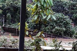 Yên Bái: 24 người chết và mất tích do bão số 3
