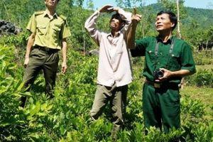 Người gần 2.000 ngày làm 'bà đỡ' của loài linh trưởng núi Thiết Sơn