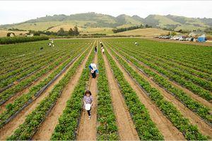 Mỹ hỗ trợ 12 tỷ USD cho nông dân bị thiệt hại do các đòn trả đũa thương mại
