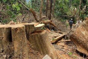 Quảng Nam: Kỷ luật 1 chủ tịch xã buông lỏng bảo vệ rừng