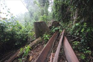 Quảng Nam: Để xảy ra mất rừng, chủ tịch xã bị kỷ luật