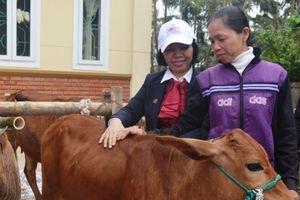 Agribank Hà Tĩnh trao tặng 132 con bò cho hộ nghèo