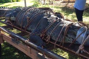 Cá sấu 6 tạ lọt lưới sau một 10 năm lẩn trốn