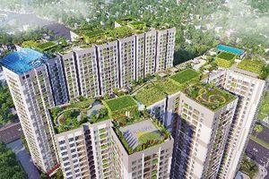 Vườn trên cao - lời giải cho khát vọng sống xanh
