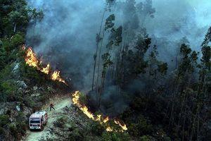 Hơn 700 nhân viên cứu hỏa đối phó với cháy rừng ở Bồ Đào Nha