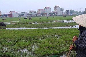 Quảng Bình: Lạ đời dân nghèo phải đóng phí mua đồng cỏ cho trâu, bò