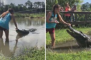 Cô gái liều lĩnh lội xuống đầm nước dụ cá sấu khổng lồ lên bờ
