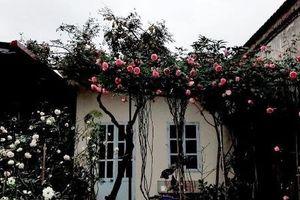Quá yêu vợ con, ông bố trẻ biến nhà thành vườn hoa
