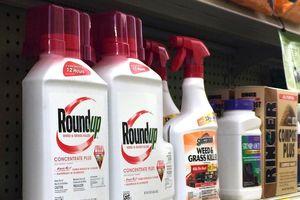 Nhận bản án 289 triệu đô, Monsanto đối diện thêm hàng nghìn vụ kiện khác