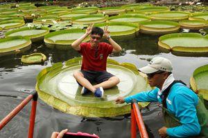 Trải nghiệm đi thuyền sen vua hiếm có ở Đài Loan