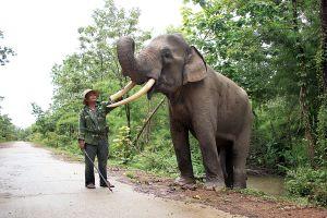 Khi voi Buôn Đôn không còn phải cõng khách