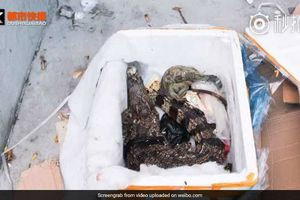 Đặt hàng sản phẩm sức khỏe trực tuyến, nhận hàng là xác cá sấu chết