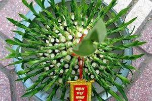 Những loại cây phong thủy đem lại tài lộc và may mắn cho gia chủ