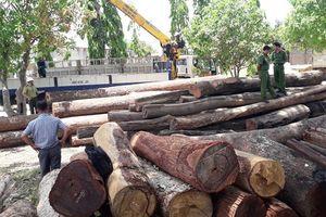 Nhận hàng trăm triệu đồng từ trùm gỗ lậu: Hạt trưởng Kiểm lâm bị bắt