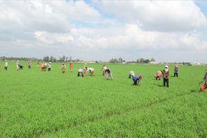 Tích tụ và tập trung đất đai để phát triển nền nông nghiệp hàng hóa lớn ở Kiên Giang