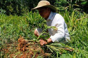 Người dân Quảng Nam khốn đốn vì Nghệ không có đầu ra