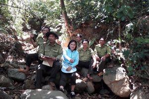 Bình Định: Gian nan bảo vệ rừng giáp ranh giữa 2 huyện An Lão và Hoài Nhơn