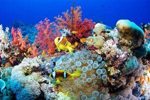 Lý do khiến lặn ở biển Đỏ- Ai Cập là trải nghiệm không thể bỏ qua
